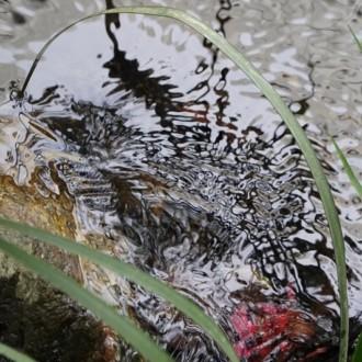 生田神社の水面